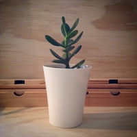 Succulent anne black pot plants